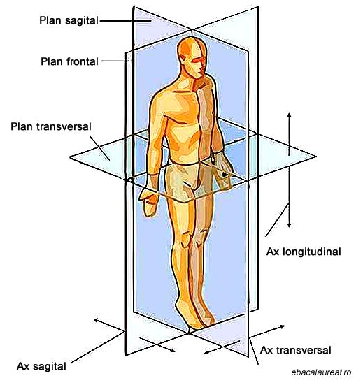anatomie planurile-corpului-uman